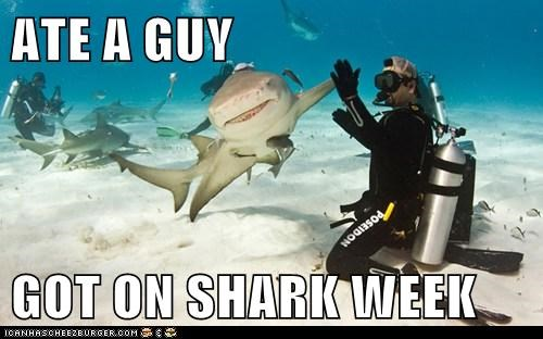 success,shark week,high five