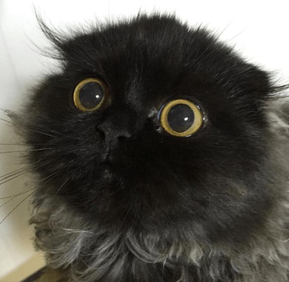 cat gimo eyes - 743429