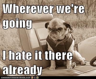grumpy dogs funny - 7434337280