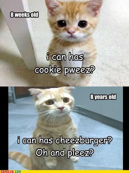Cheezburger Image 7434440960