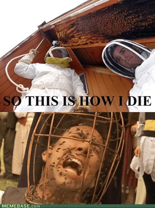 bees nicolas cage re-frames funny - 7434784256
