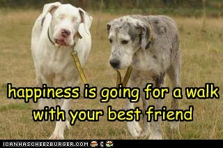 happiness is going for a walk with your best friend