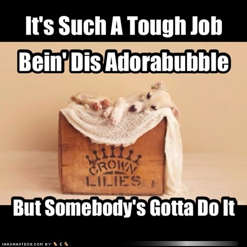 tough job cute funny