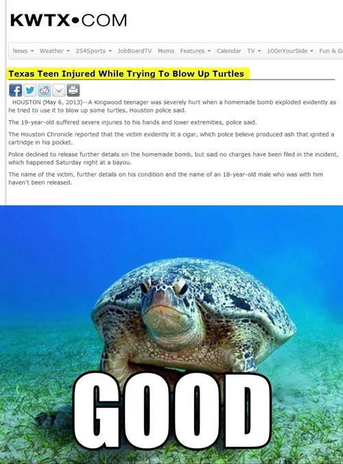 justice turtles Probably bad News irony funny - 7435549184
