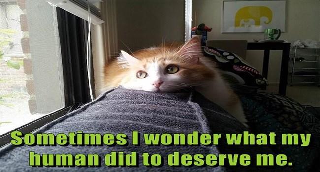 lolcats Cats cat memes funny cat memes funny cats funny - 7435781