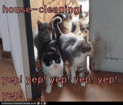 house-cleaning! yep! yep! yep! yep! yep! yep! - Lolcats