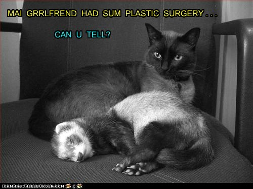 ferret plastic surgery funny - 7436430592