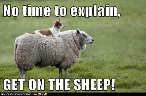 no time to explain,sheep,dogs