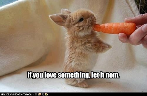 nom carrot cute bunny - 7437643776