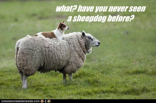 Sheep Dog sheep imposter