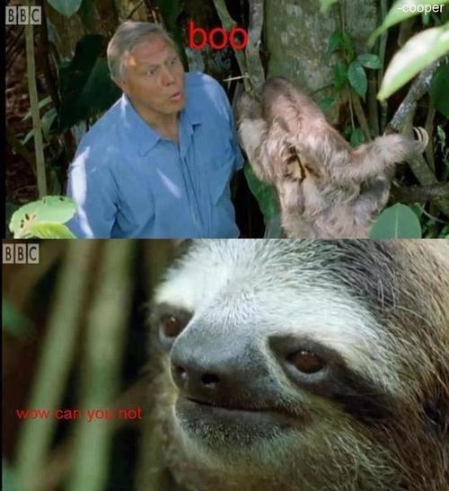 rube,boo,sloth,funny