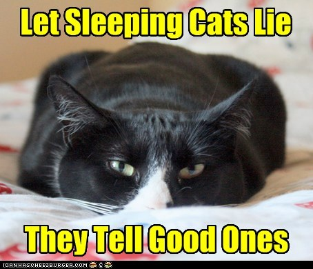 Let Sleeping Cats Lie They Tell Good Ones