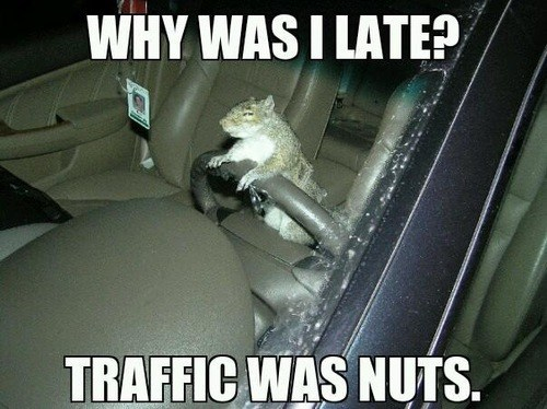 puns,squirrels,driving,funny