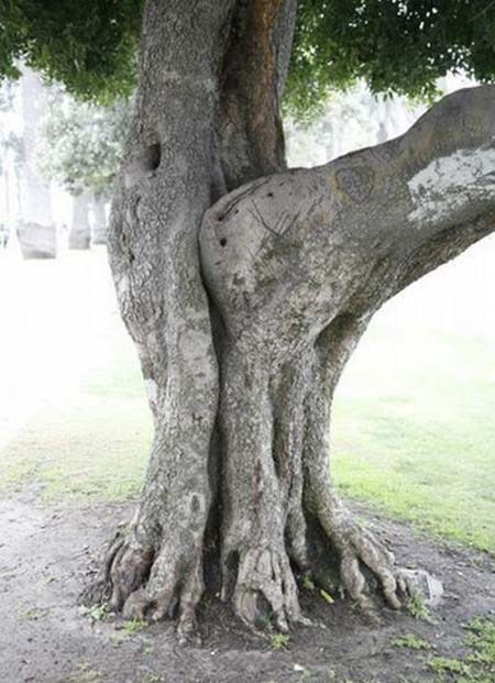 trees accidental sexy Things That Are Doing It funny - 7439150848