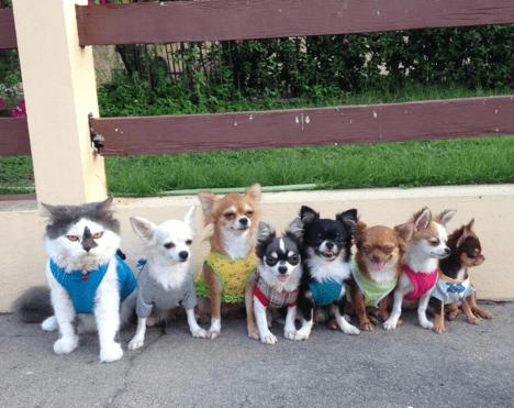 cat dogs alpha - 743941