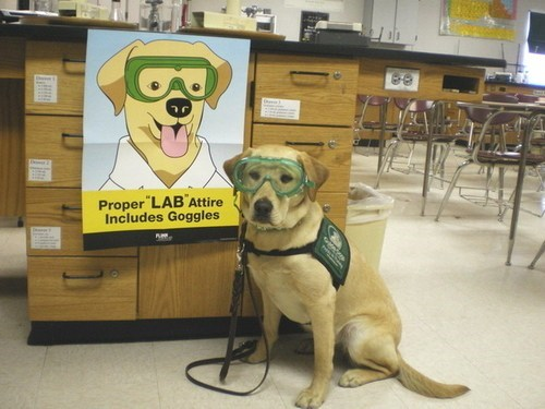 sign,mascot,lab,funny