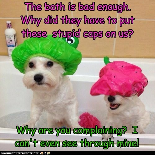 The bath is bad enough. Why did they have to put these stupid caps on us? Why are you complaining? I can't even see through mine!