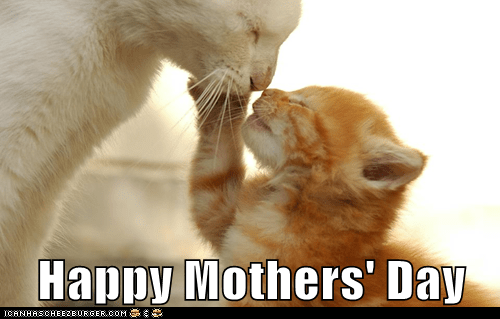 kitten cute mothers day - 7442635264
