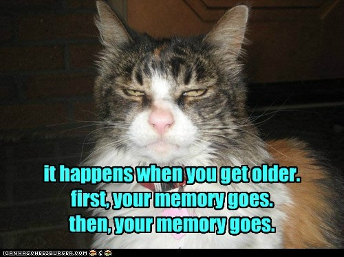 memory,senior moment,Cats
