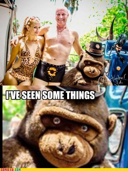 wtf funny gorilla - 7442892032