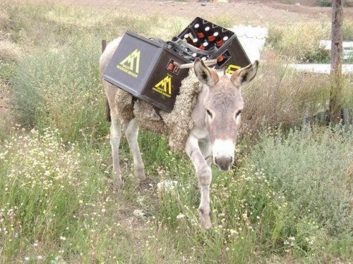booze,donkey,funny,delivery