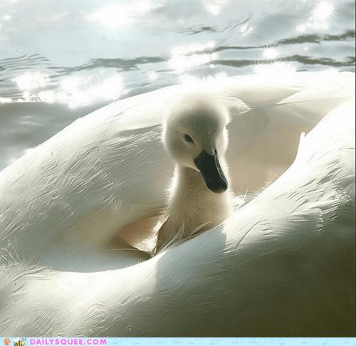 bird boat mom - 7443383040