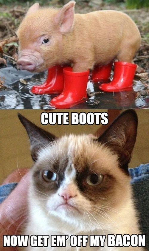 Grumpy Cat,pig,cute,funny,bacon
