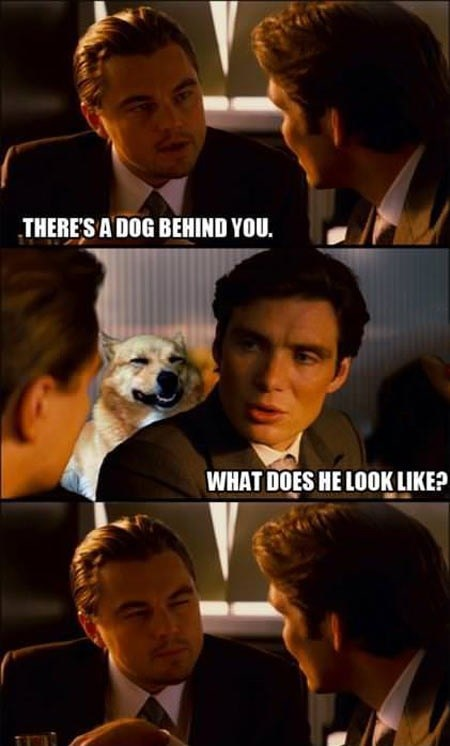 dogs Inception Memes animals - 7443593728