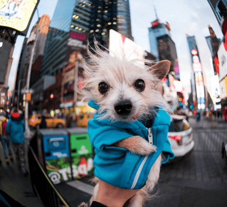 dogs new york photography - 744453