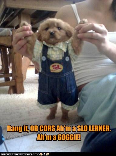 Dang it, OB CORS Ah'm a SLO LERNER. Ah'm a GOGGIE!