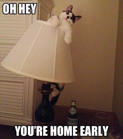 lamp,funny
