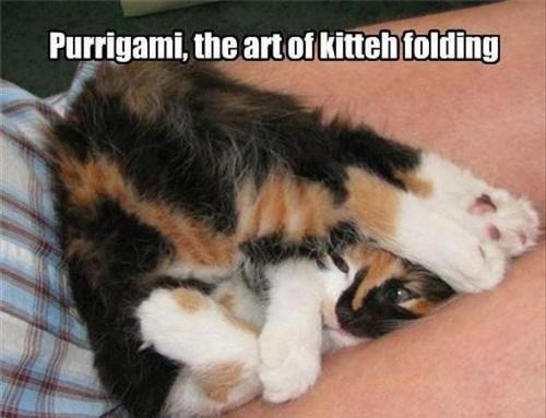 lolcats Cats funny animals - 7446560768