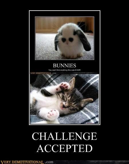 wtf war cute bunny funny - 7446580224