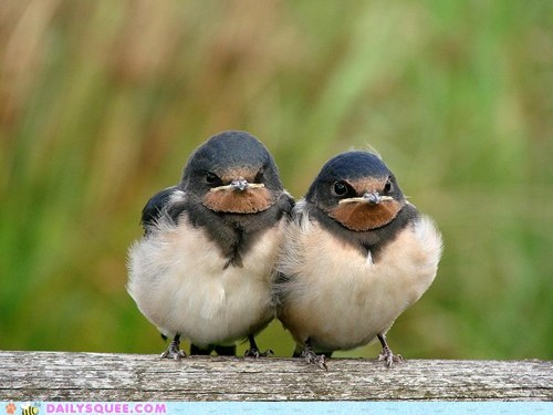 birds,angry,grumpy,funny