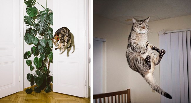 UFOs abducted funny cats cat photos Cats - 7447557