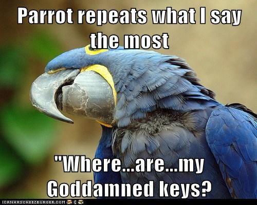 "Parrot repeats what I say the most ""Where...are...my Goddamned keys?"