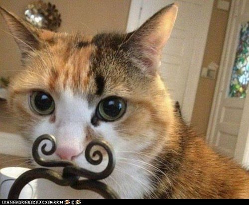 mustache sir funny - 7449163264
