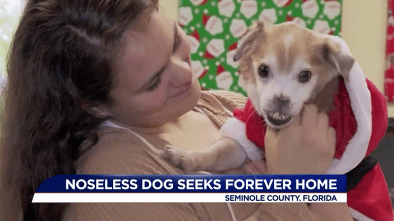noseless dog finds a forever home and gets adopted
