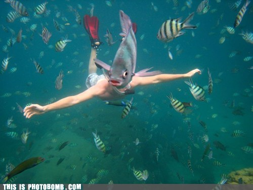 photobomb fish funny - 7449471232