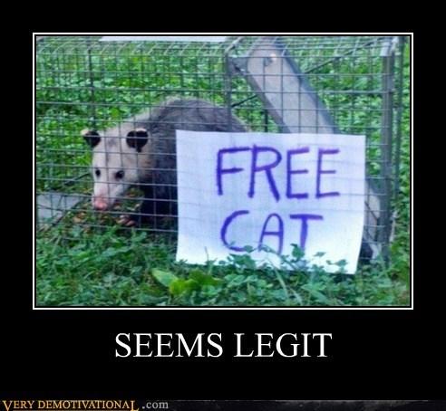 possum Cats funny - 7449804288