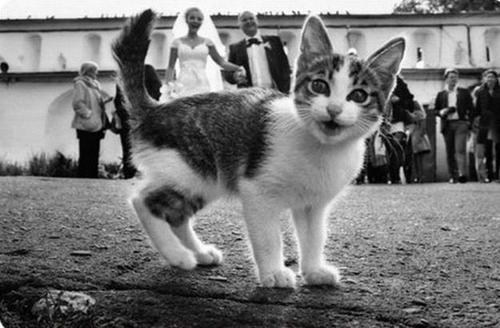 cat photobomb kitten wedding funny