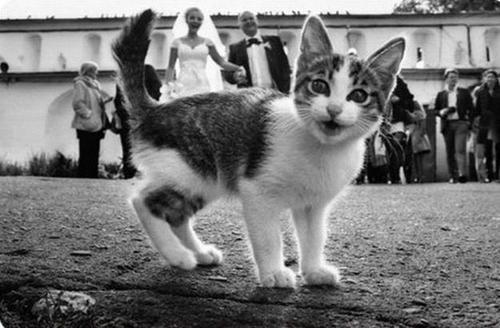 cat photobomb kitten wedding funny - 7449825792