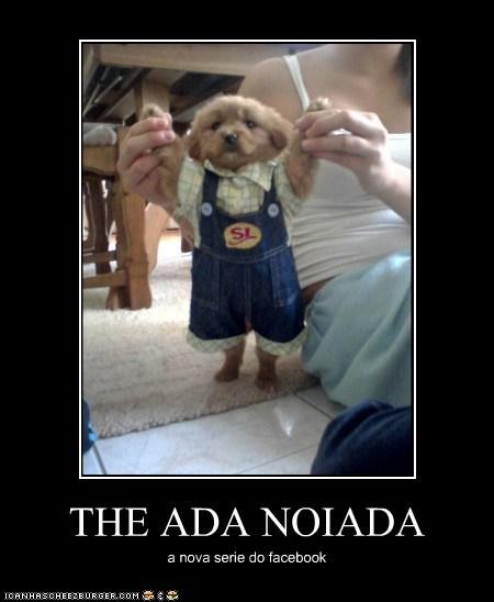 THE ADA NOIADA a nova serie do facebook