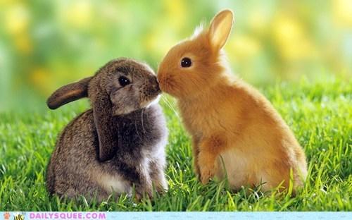 bunnies KISS
