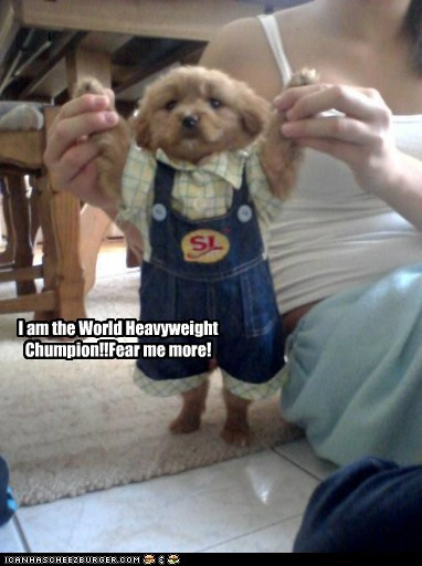 I am the World Heavyweight Chumpion!!Fear me more!