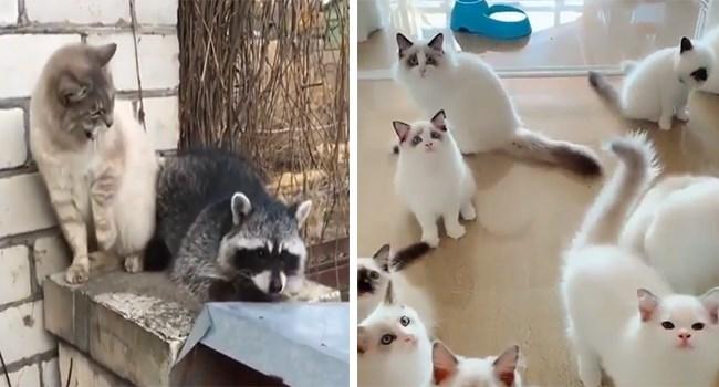 aww gifs videos cute cute cats funny cats kitty Cats funny jo38ma3 - 7451141