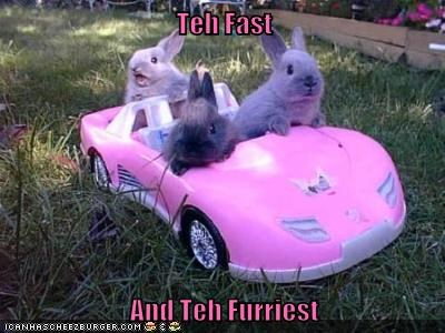 bunnies,the fast and the furious,funny