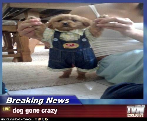 Cheezburger Image 7452976128