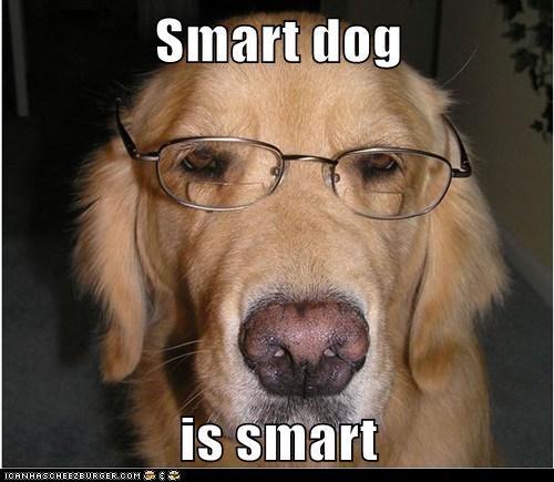 Smart dog  is smart