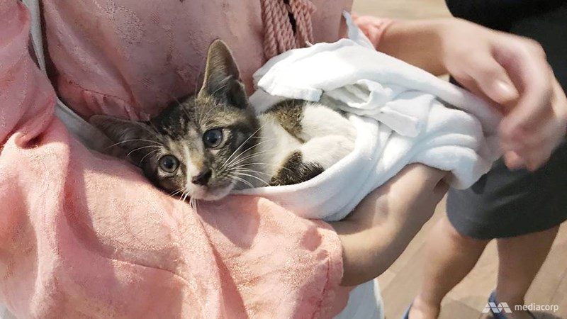rescued rescue kitten saved uplifting beautiful - 7453701
